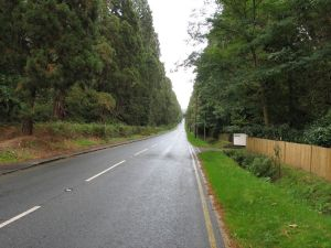 Wellingtonia Avenue, Crowthorne: 2006