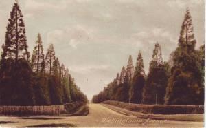 Wellingtonia Avenue