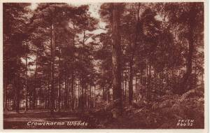 """Crowthorne Woods"""