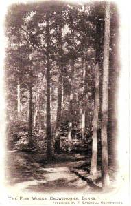 """The Pine Woods, Crowthorne, Berks"""